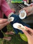 Hog Island Oysters!